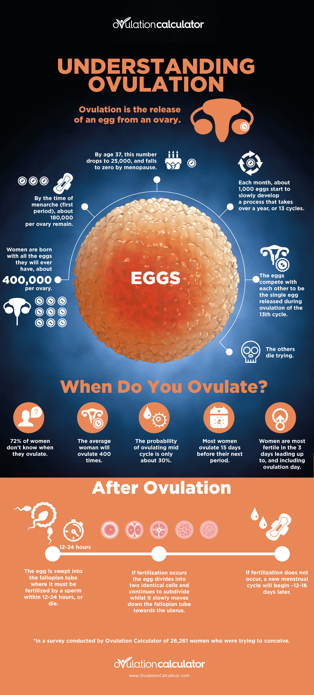 Understanding Ovulation Infographic