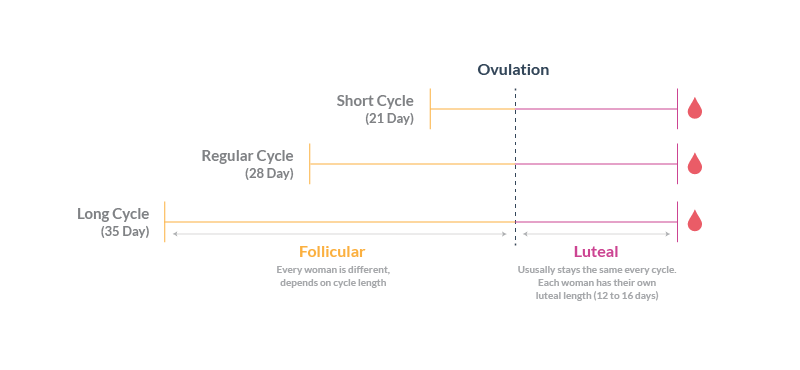 Cycle Length, Varying Follicular Phase, Consistent Luteal Phases