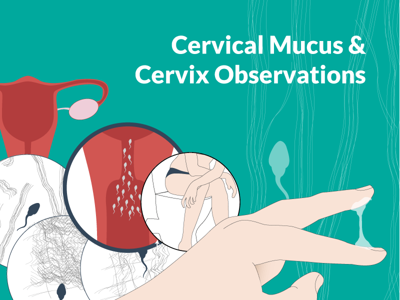 Cervical Mucus Fluid - Featured Image