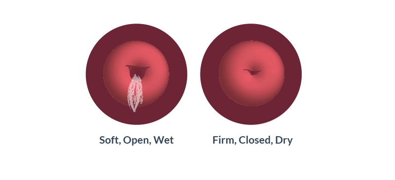 Cervix is shaped like a small doughnut with a small hole in the center